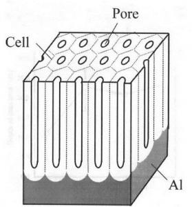Anodized Aluminium Biocompatible