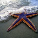 Astero StarFish